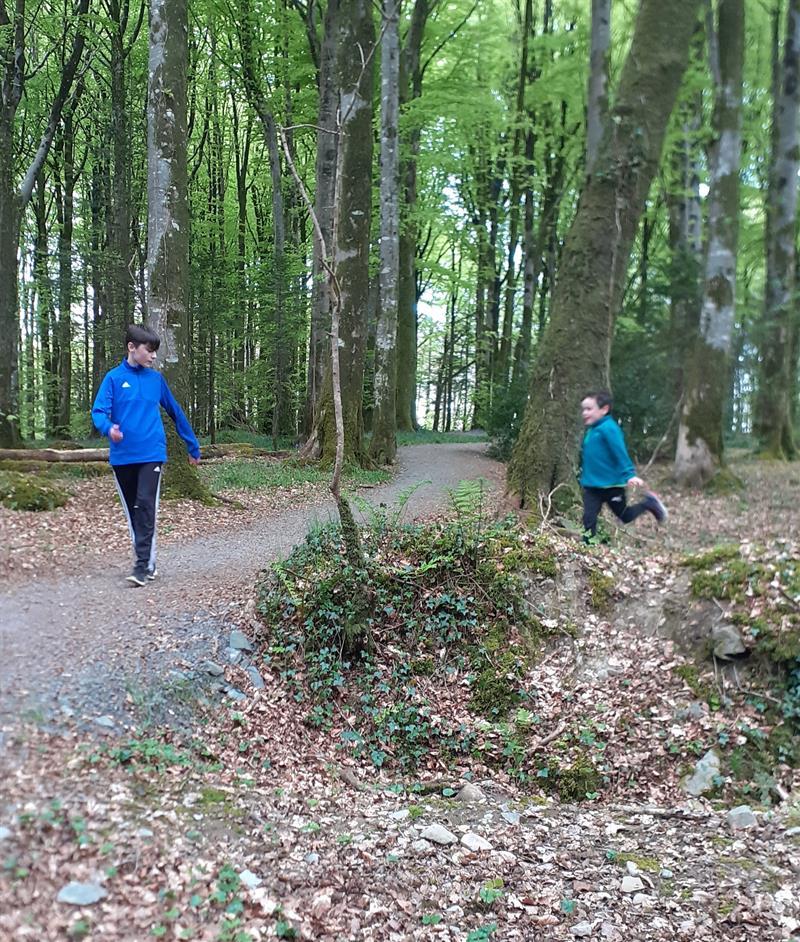 Forest Walks 2.jpg